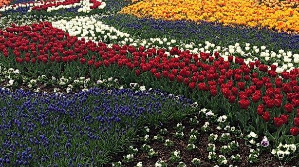 LTR - tulips at Kew Garden