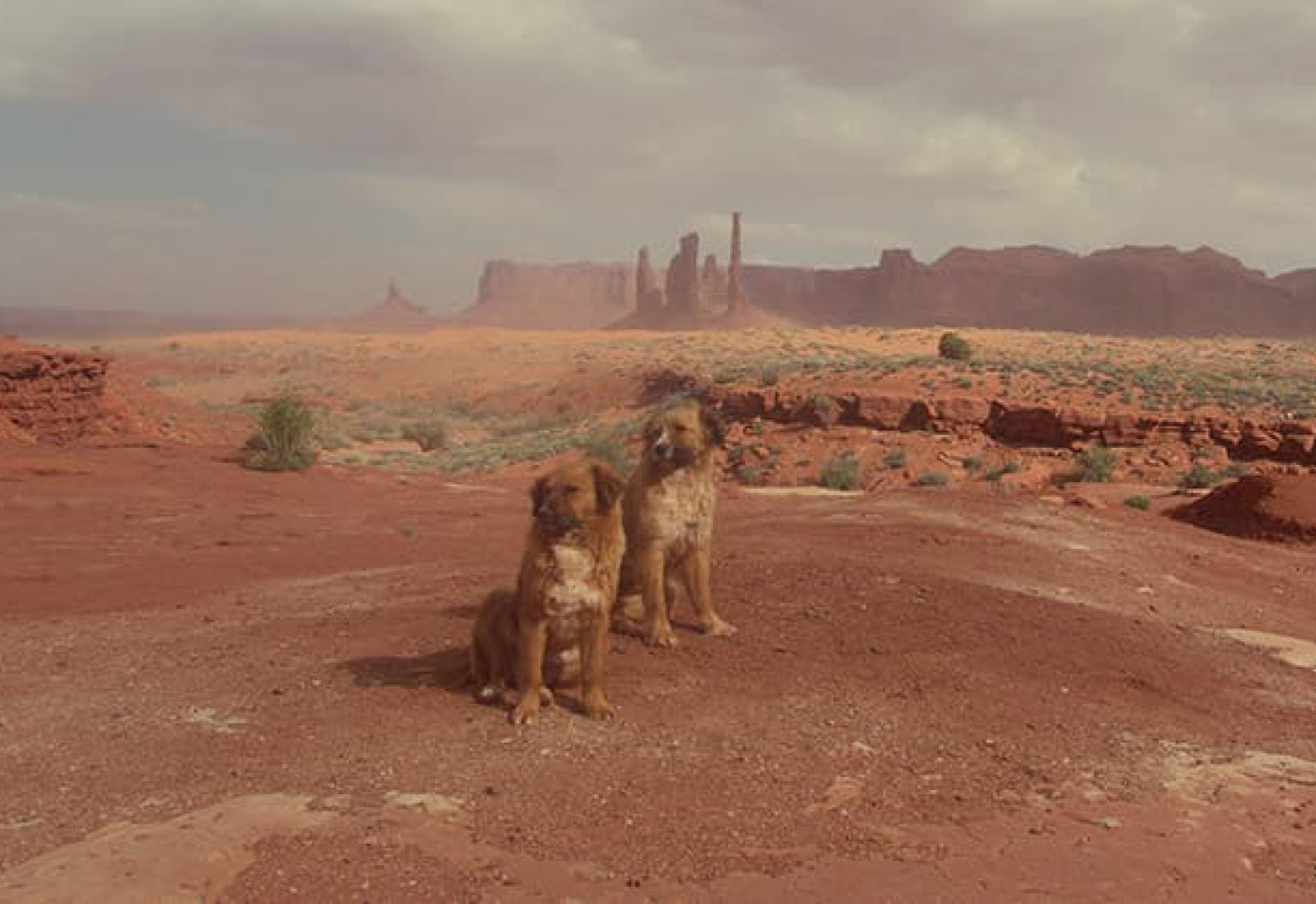 Wild Dogs in a Monument Valley Sandstorm